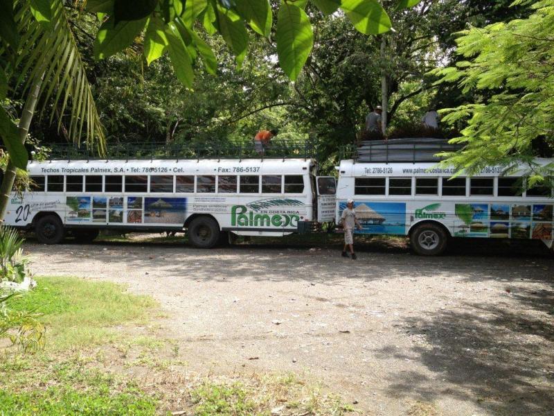 Une idée marketing originale : des autobus tropicaux